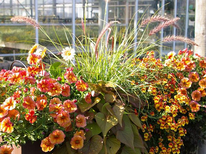 Sommerliche bakon bepflanzung in orange for Balkon pflanzen ideen