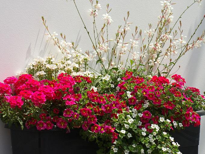 Terrassen Pflanzen