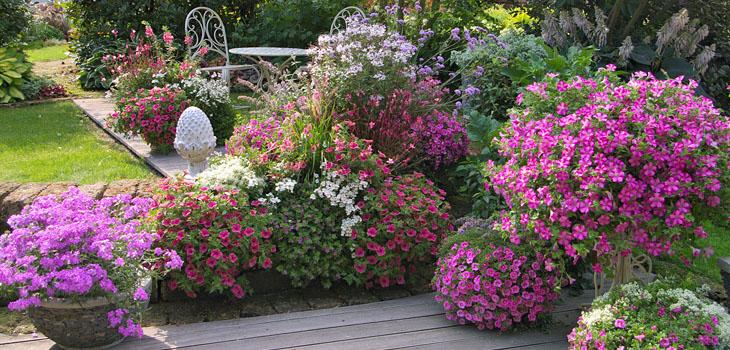Individuelle Terrassengestaltung mit magentafarbenen Pflanzen